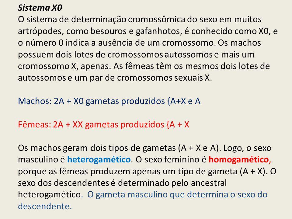 Sistema X0 O sistema de determinação cromossômica do sexo em muitos artrópodes, como besouros e gafanhotos, é conhecido como X0, e o número 0 indica a