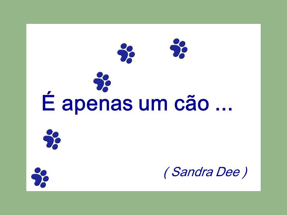 É apenas um cão... ( Sandra Dee )