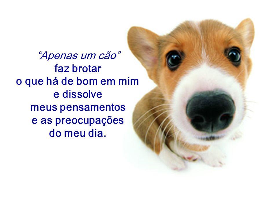 """""""Apenas um cão"""" faz brotar o que há de bom em mim e dissolve meus pensamentos e as preocupações do meu dia."""