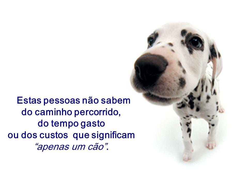 """Estas pessoas não sabem do caminho percorrido, do tempo gasto ou dos custos que significam """"apenas um cão""""."""