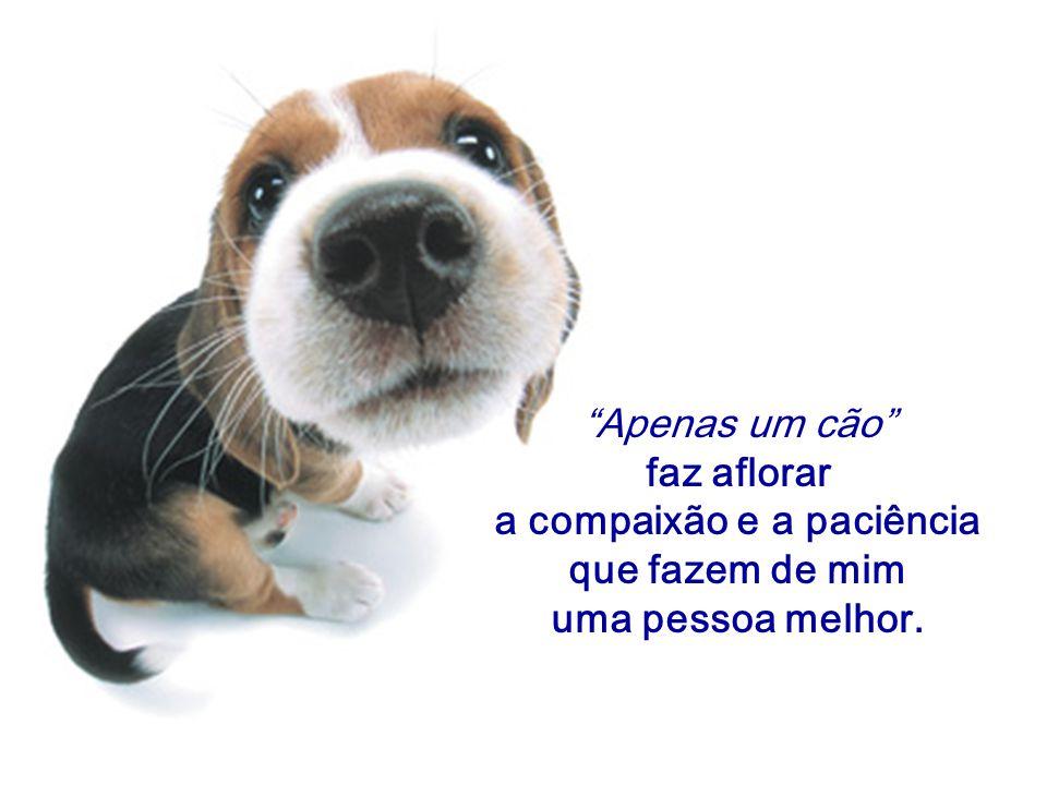 """""""Apenas um cão"""" faz aflorar a compaixão e a paciência que fazem de mim uma pessoa melhor."""