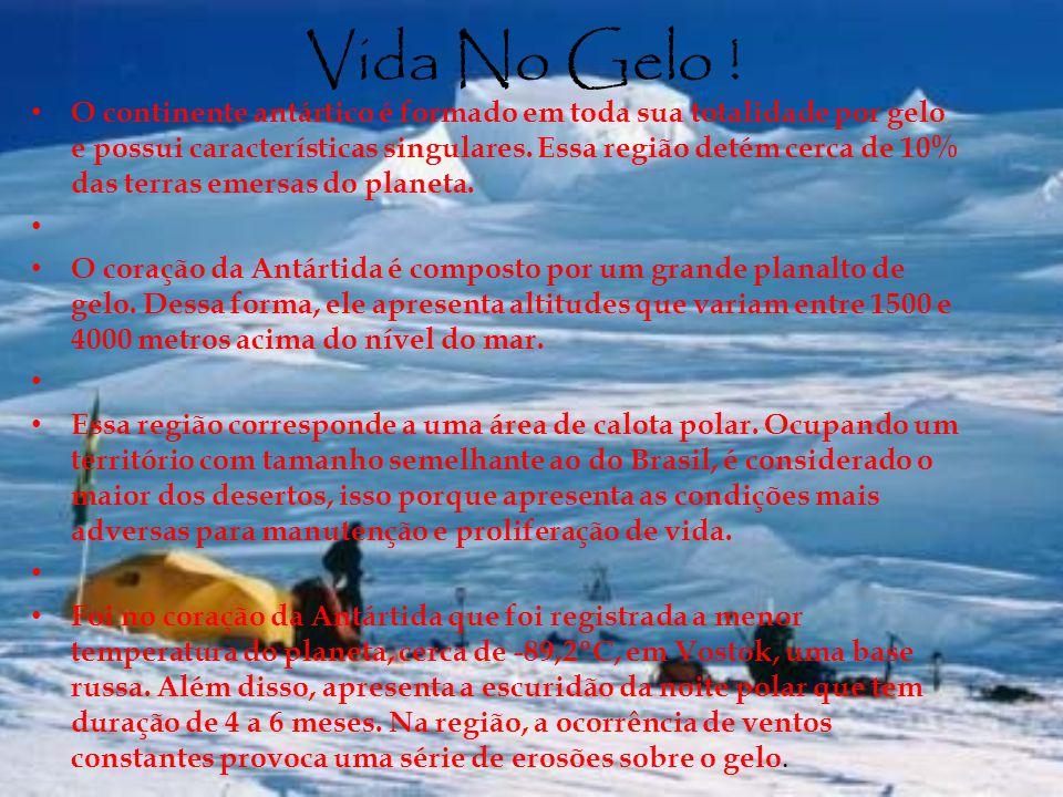Vida No Gelo ! O continente antártico é formado em toda sua totalidade por gelo e possui características singulares. Essa região detém cerca de 10% da