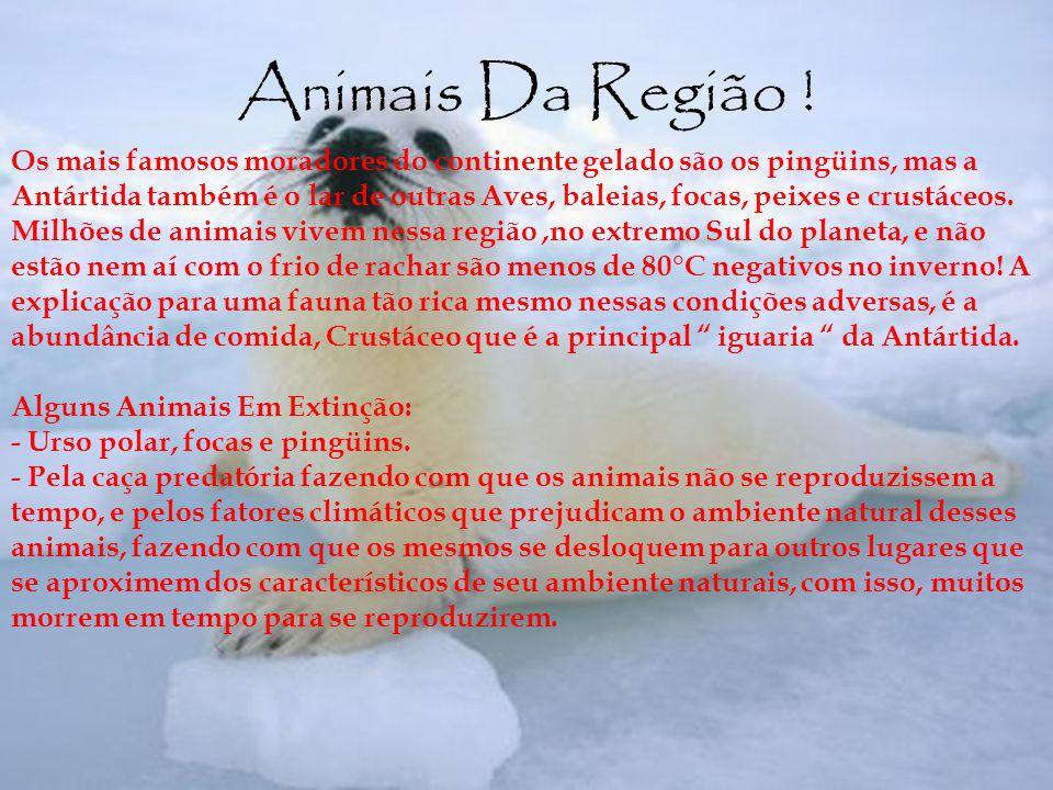 Animais Da Região ! Os mais famosos moradores do continente gelado são os pingüins, mas a Antártida também é o lar de outras Aves, baleias, focas, pei