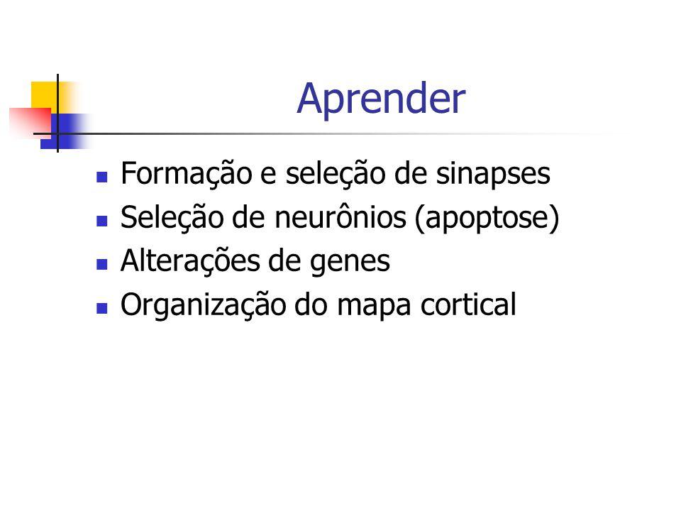 Aprender Formação e seleção de sinapses Seleção de neurônios (apoptose) Alterações de genes Organização do mapa cortical
