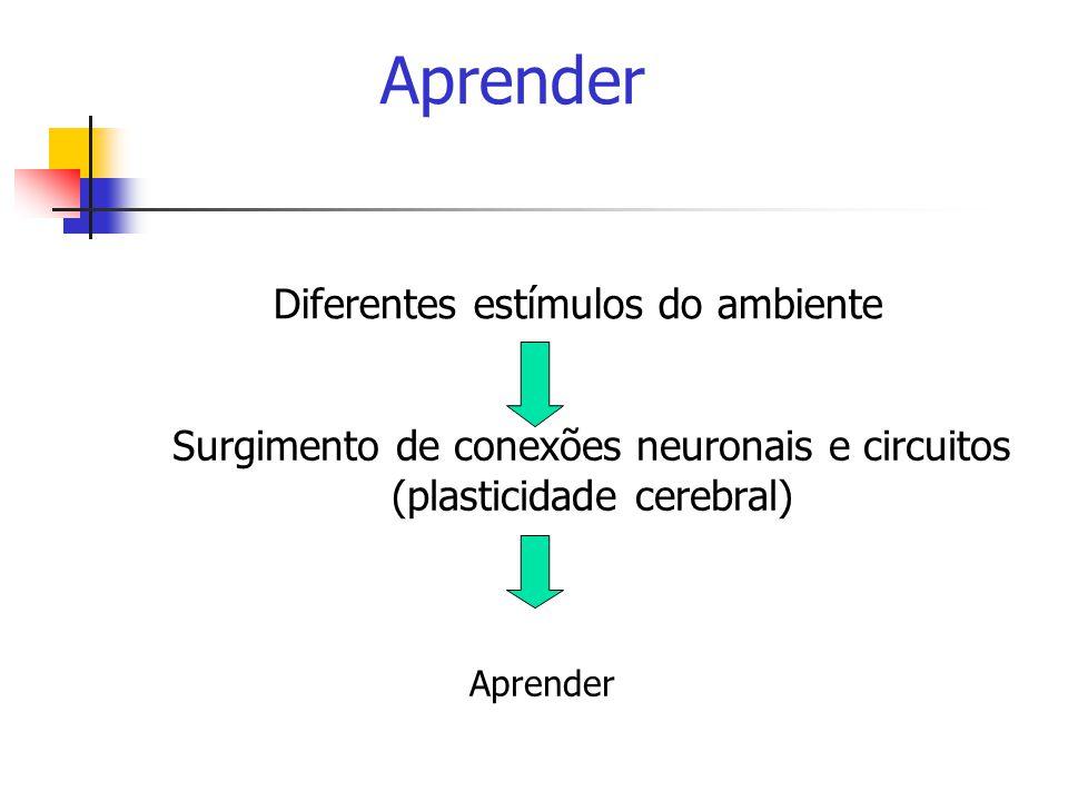 Aprender Diferentes estímulos do ambiente Surgimento de conexões neuronais e circuitos (plasticidade cerebral) Aprender