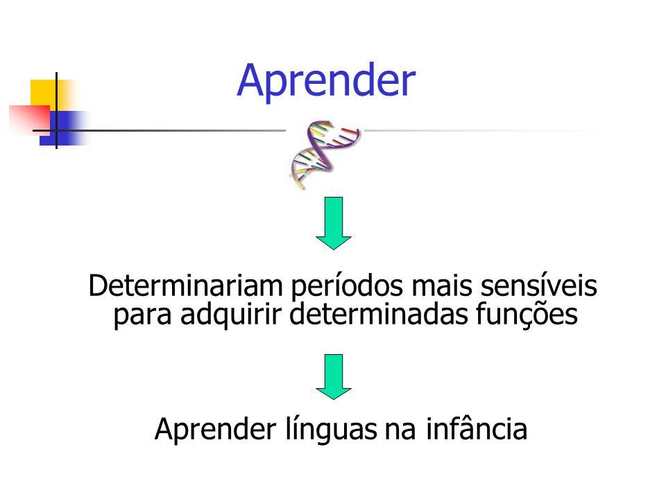 Determinariam períodos mais sensíveis para adquirir determinadas funções Aprender línguas na infância