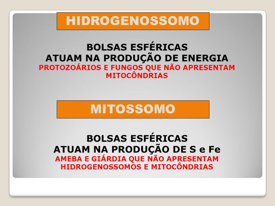 ATUAM NA DESINTOXICAÇÃO CELULAR POSSUEM A ENZIMA CATALASE (DECOMPÕE H 2 0 2 EM H 2 0 E 0 2 ) PRINCIPAL FUNÇÃO OXIDAÇÃO DE ÁCIDOS GRAXOS EM CÉLULAS VEGETAIS DENOMINA-SE: GLIOXISSOMO