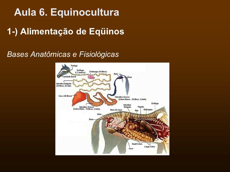 Aula 6. Equinocultura 1-) Alimentação de Eqüinos Bases Anatômicas e Fisiológicas