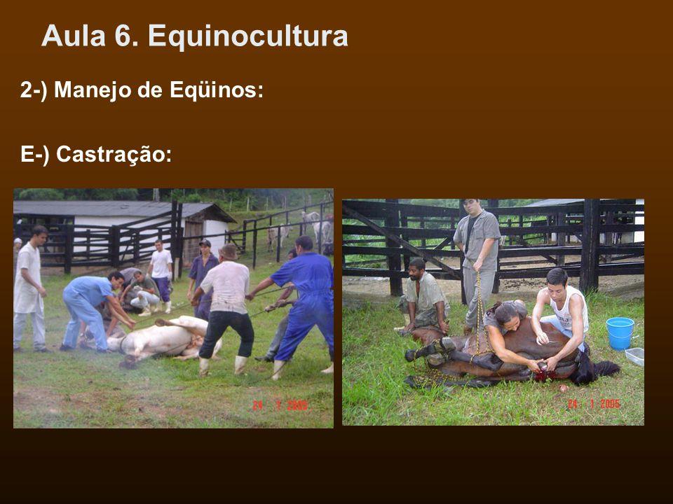 Aula 6. Equinocultura 2-) Manejo de Eqüinos: E-) Castração: