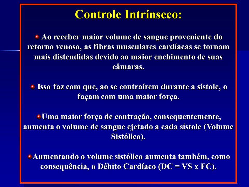 Controle Intrínseco: Controle Intrínseco: Ao receber maior volume de sangue proveniente do retorno venoso, as fibras musculares cardíacas se tornam mais distendidas devido ao maior enchimento de suas câmaras.