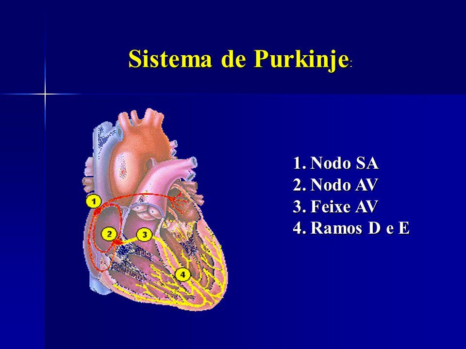 Sistema de Purkinje Sistema de Purkinje : 1.Nodo SA 2.Nodo AV 3.Feixe AV 4.Ramos D e E