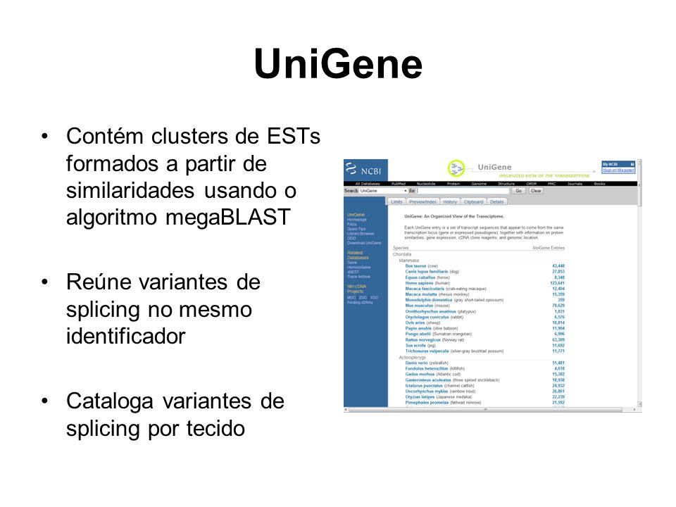 UniGene Contém clusters de ESTs formados a partir de similaridades usando o algoritmo megaBLAST Reúne variantes de splicing no mesmo identificador Cat