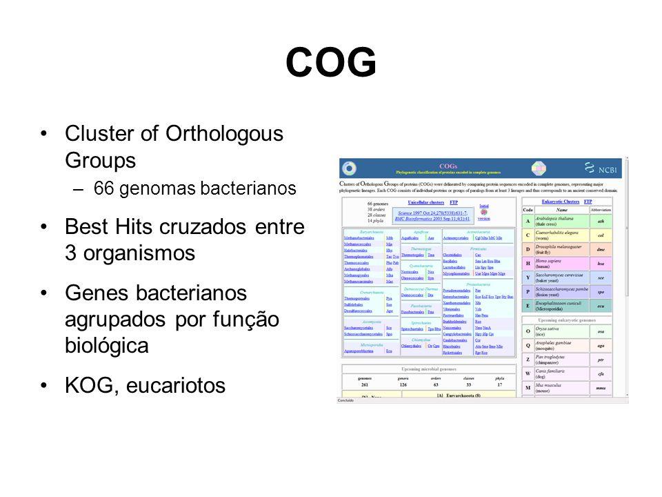 COG Cluster of Orthologous Groups –66 genomas bacterianos Best Hits cruzados entre 3 organismos Genes bacterianos agrupados por função biológica KOG,