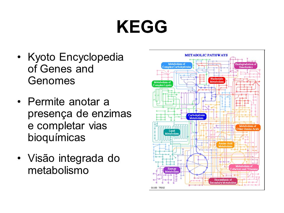 KEGG Kyoto Encyclopedia of Genes and Genomes Permite anotar a presença de enzimas e completar vias bioquímicas Visão integrada do metabolismo