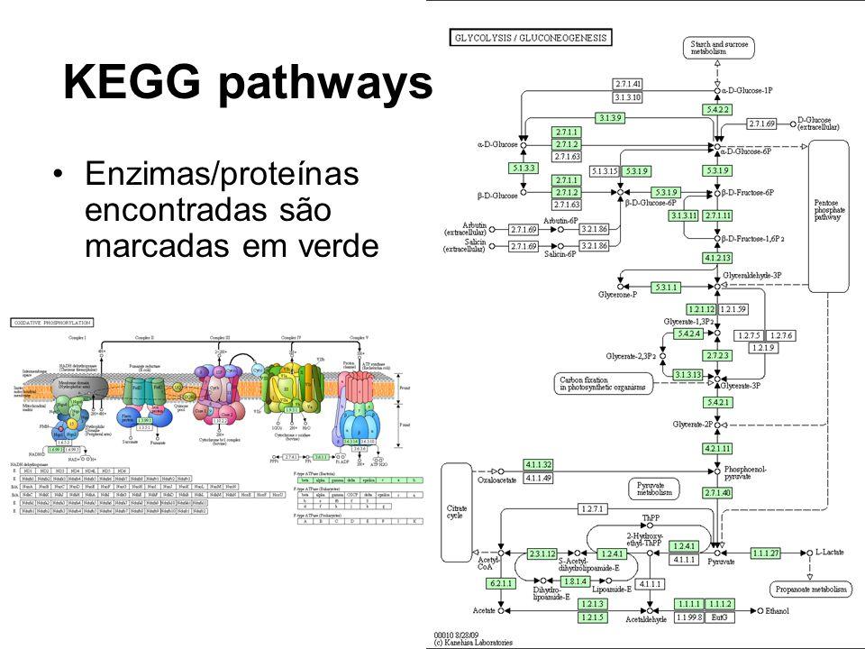 KEGG pathways Enzimas/proteínas encontradas são marcadas em verde