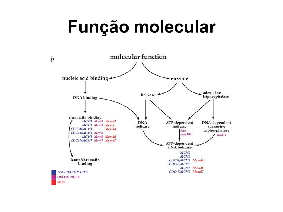 Função molecular