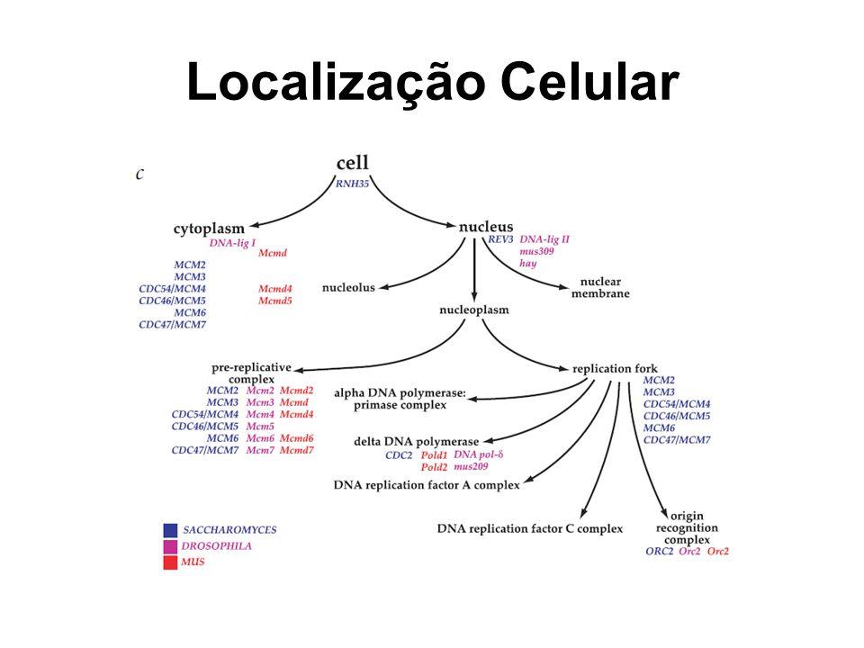 Localização Celular