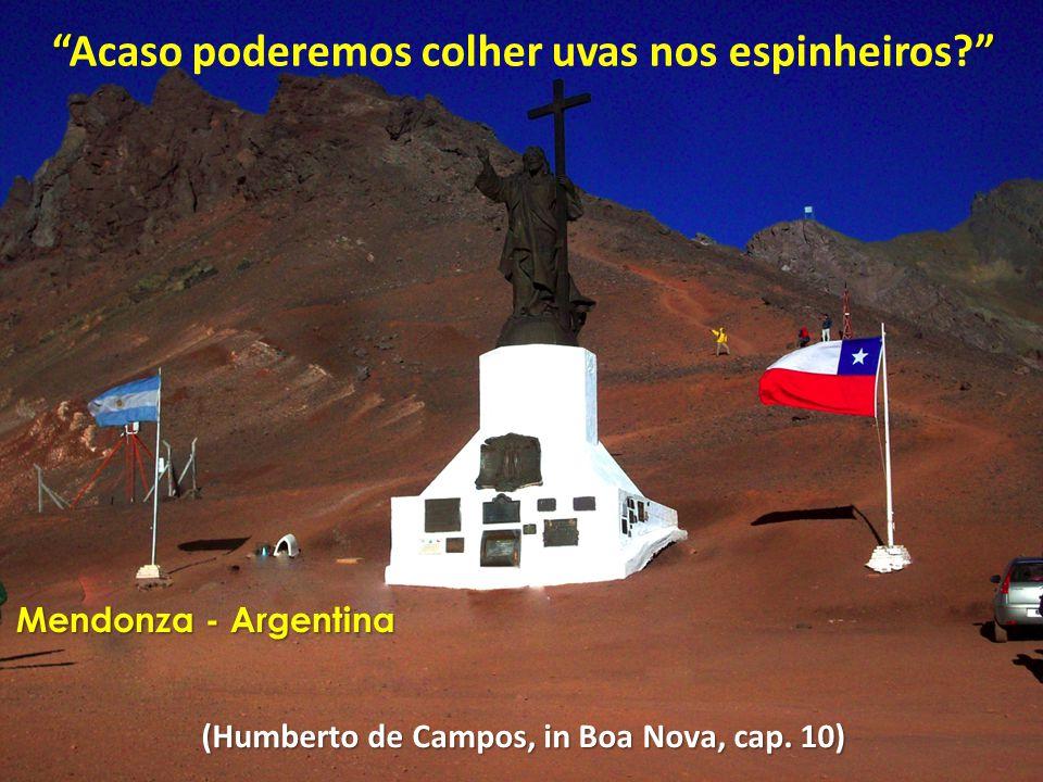 """"""""""" """"Acaso poderemos colher uvas nos espinheiros?"""" (Humberto de Campos, in Boa Nova, cap. 10) Mendonza - Argentina"""