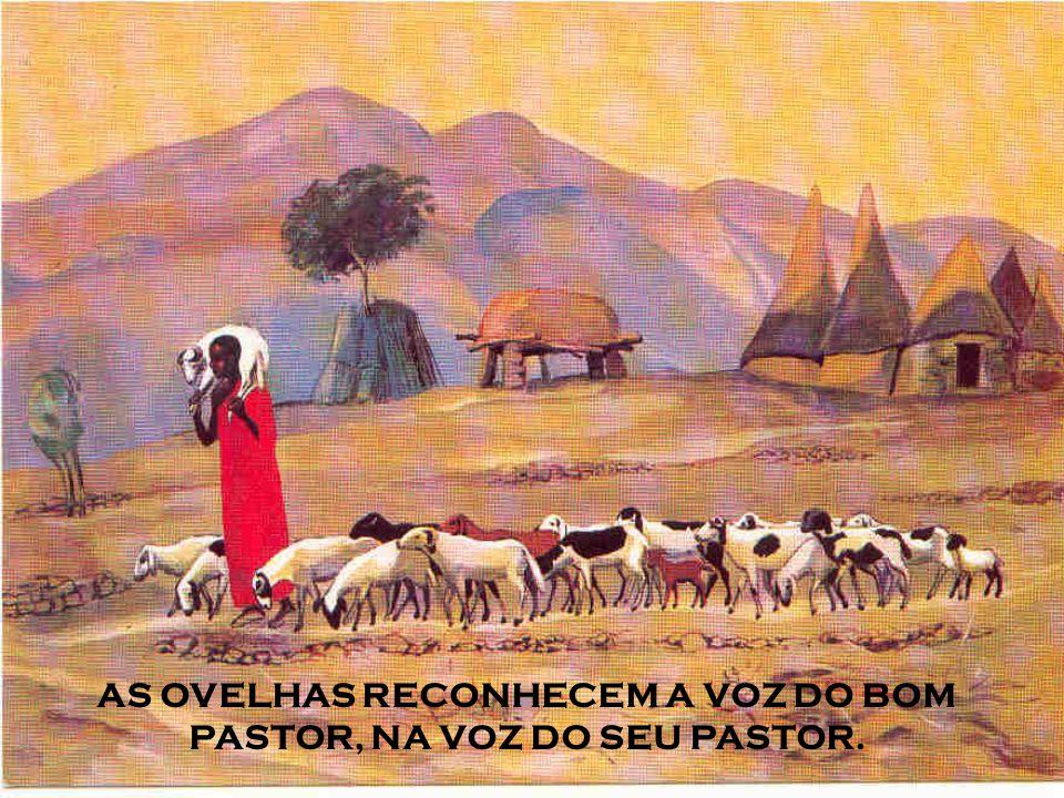 A história da Igreja está permeada de bons e santos pastores, que deram o bom exemplo de guiar e conduzir as ovelhas de Jesus.