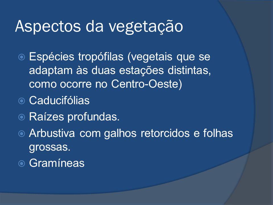 Aspectos da vegetação  Espécies tropófilas (vegetais que se adaptam às duas estações distintas, como ocorre no Centro-Oeste)  Caducifólias  Raízes