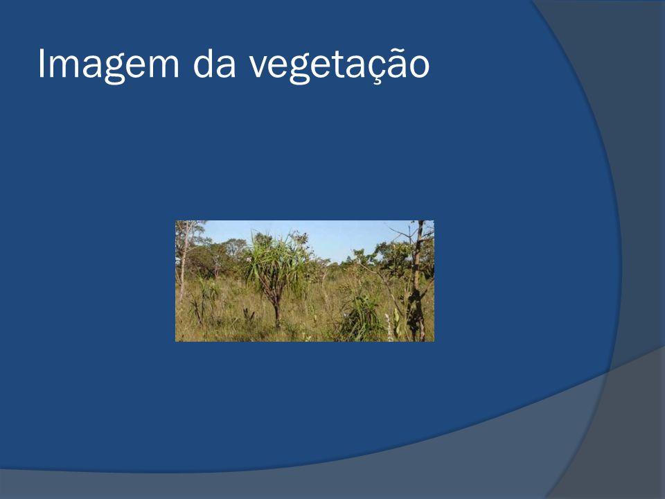 Imagem da vegetação