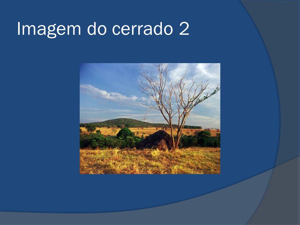 Imagem do cerrado 2