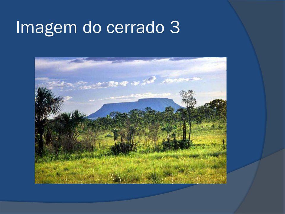 Classificação do Cerrado – em subistemas  de campo,  de cerrado,  de cerradão,  de matas ciliares e/ou de veredas  ambientes alagadiços.