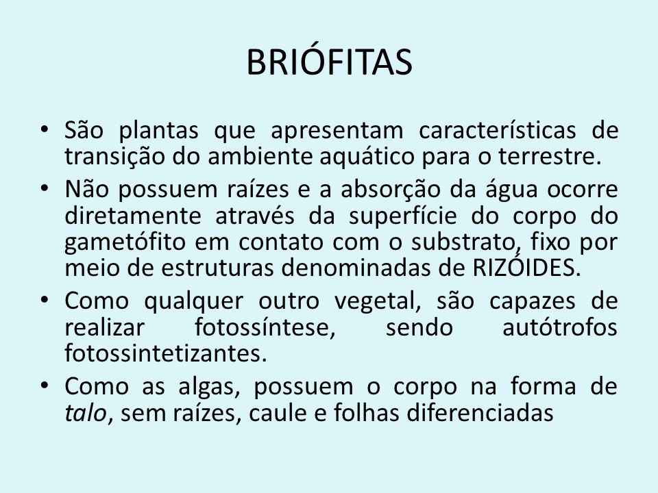 BRIÓFITAS São plantas que apresentam características de transição do ambiente aquático para o terrestre. Não possuem raízes e a absorção da água ocorr