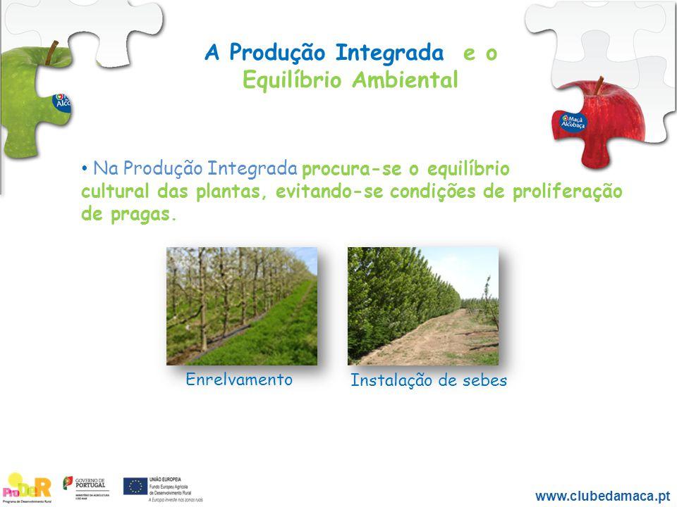 A Produção Integrada e o Equilíbrio Ambiental Na Produção Integrada procura-se o equilíbrio cultural das plantas, evitando-se condições de proliferaçã