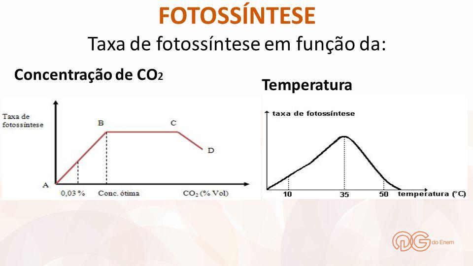 FOTOSSÍNTESE Taxa de fotossíntese em função da: Concentração de CO 2 Temperatura