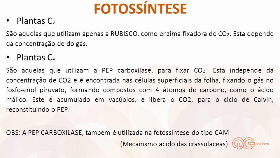 FOTOSSÍNTESE Plantas C 3 São aquelas que utilizam apenas a RUBISCO, como enzima fixadora de CO 2. Esta depende da concentração de do gás. Plantas C 4