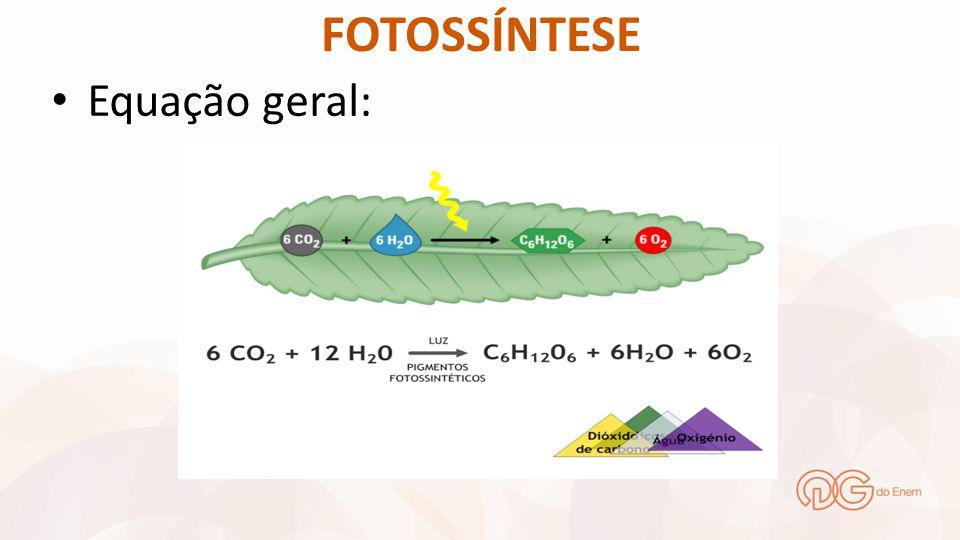FOTOSSÍNTESE Plantas C 3 São aquelas que utilizam apenas a RUBISCO, como enzima fixadora de CO 2.