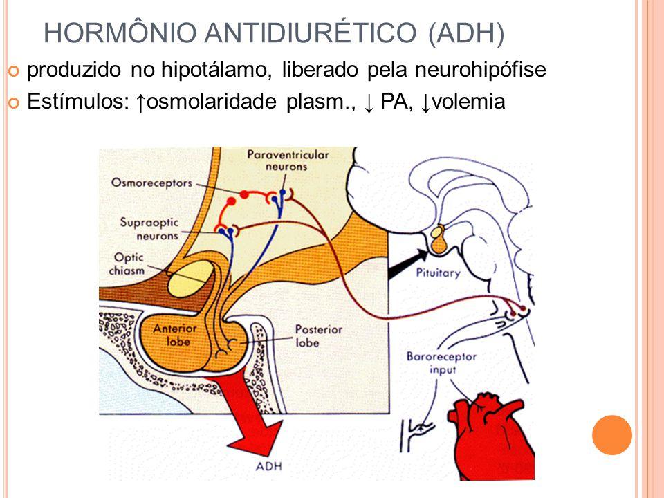 HORMÔNIO ANTIDIURÉTICO (ADH) produzido no hipotálamo, liberado pela neurohipófise Estímulos: ↑ osmolaridade plasm., ↓ PA, ↓volemia