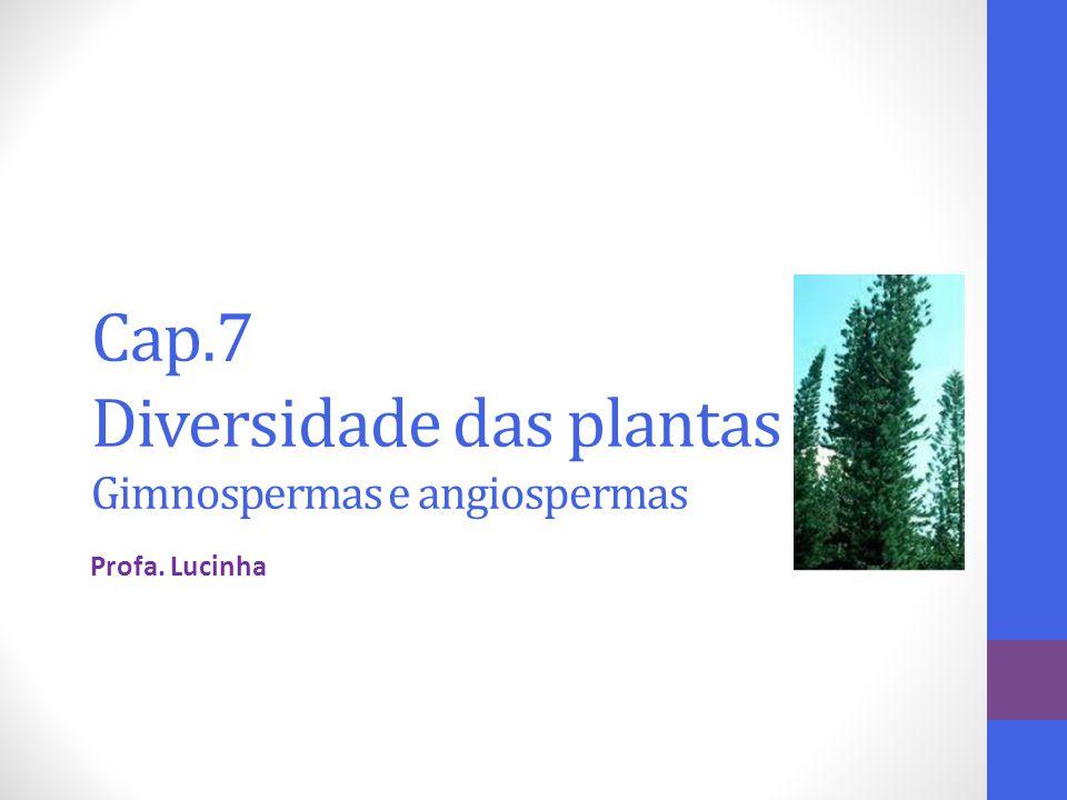 Cap.7 Diversidade das plantas Gimnospermas e angiospermas Profa. Lucinha