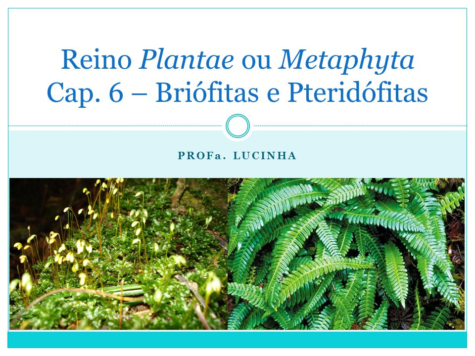 PROFa. LUCINHA Reino Plantae ou Metaphyta Cap. 6 – Briófitas e Pteridófitas