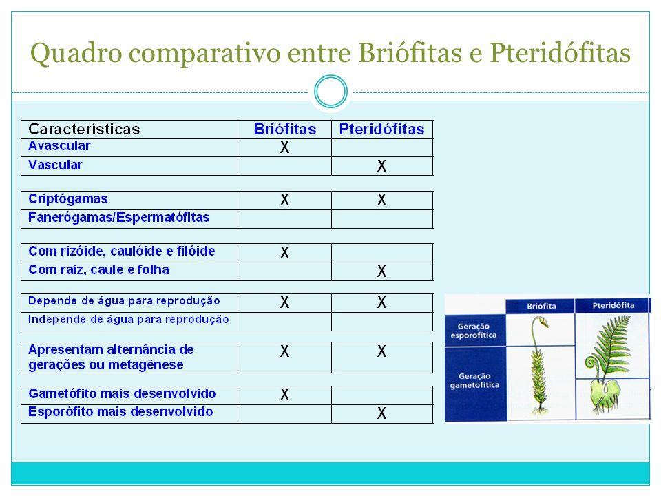 Quadro comparativo entre Briófitas e Pteridófitas