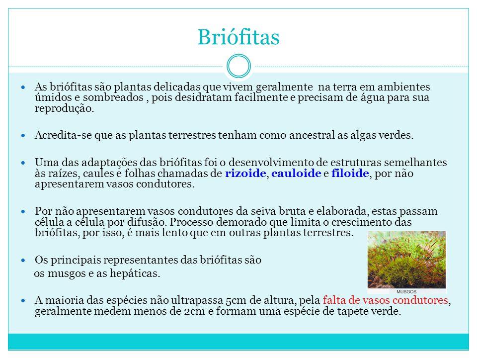 Briófitas As briófitas são plantas delicadas que vivem geralmente na terra em ambientes úmidos e sombreados, pois desidratam facilmente e precisam de água para sua reprodução.