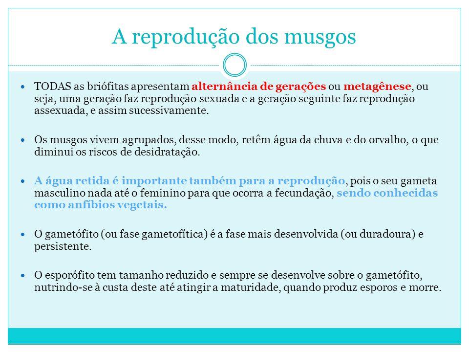 A reprodução dos musgos TODAS as briófitas apresentam alternância de gerações ou metagênese, ou seja, uma geração faz reprodução sexuada e a geração seguinte faz reprodução assexuada, e assim sucessivamente.