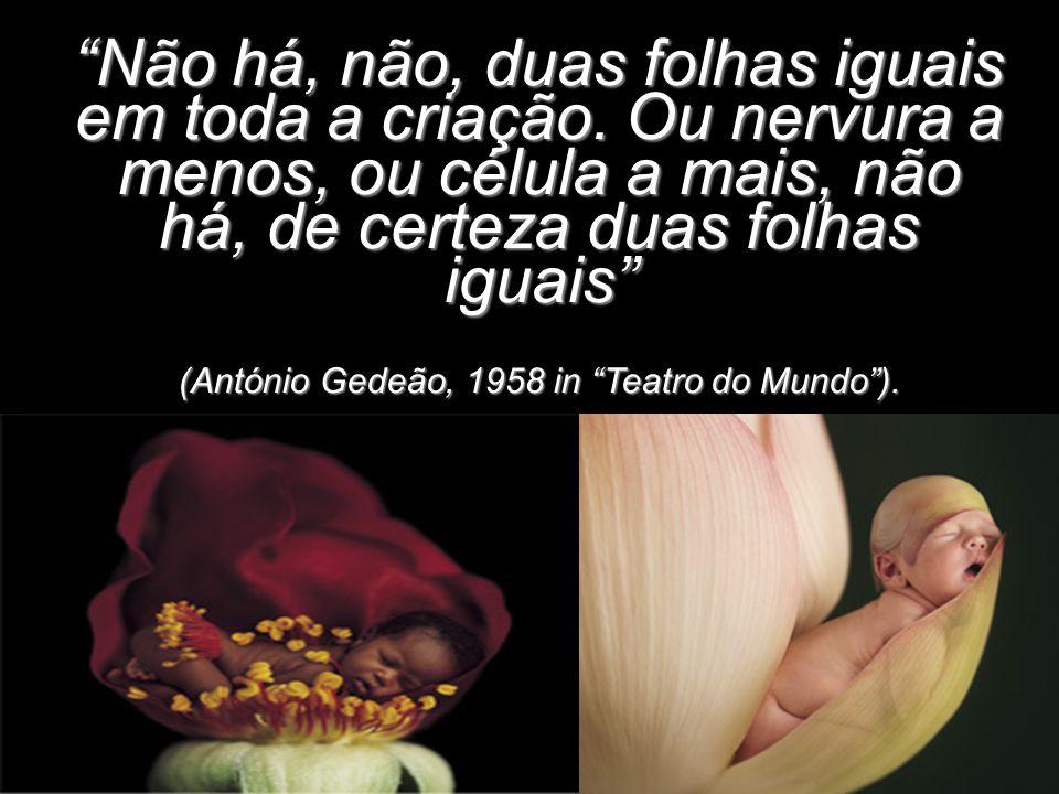 """""""Não há, não, duas folhas iguais em toda a criação. Ou nervura a menos, ou célula a mais, não há, de certeza duas folhas iguais"""" (António Gedeão, 1958"""