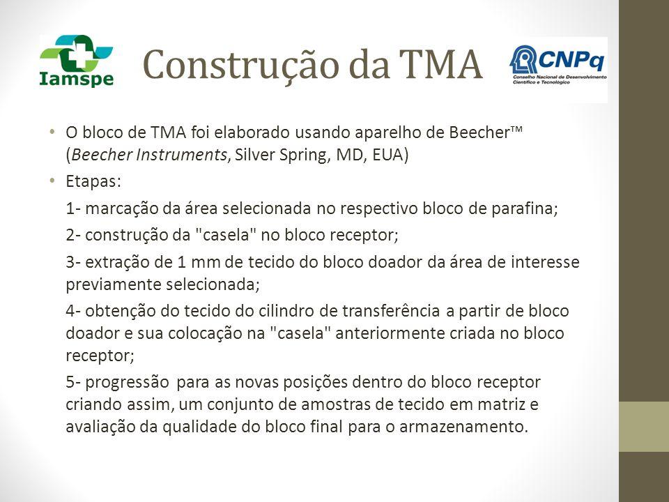 Construção da TMA O bloco de TMA foi elaborado usando aparelho de Beecher™ (Beecher Instruments, Silver Spring, MD, EUA) Etapas: 1- marcação da área s
