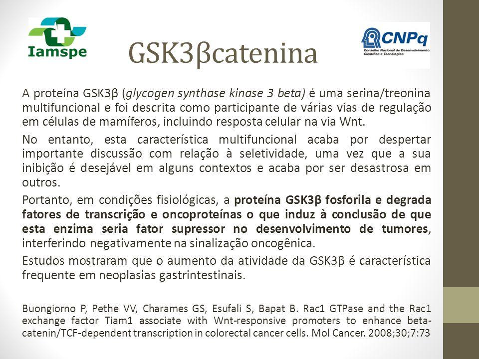 GSK3βcatenina A proteína GSK3β (glycogen synthase kinase 3 beta) é uma serina/treonina multifuncional e foi descrita como participante de várias vias