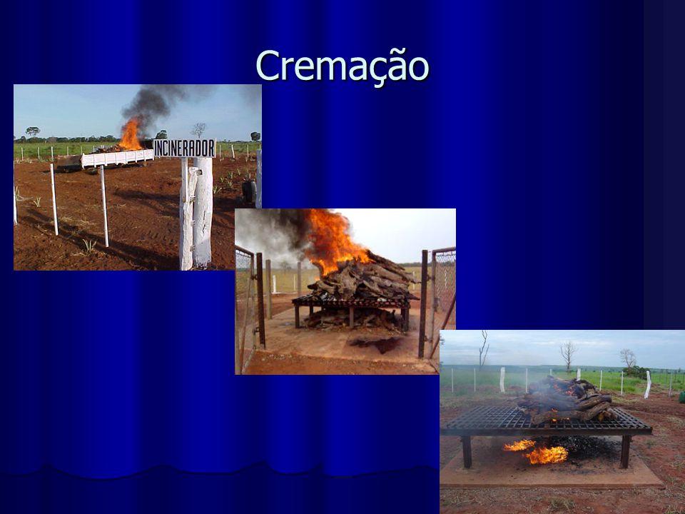 Cremação