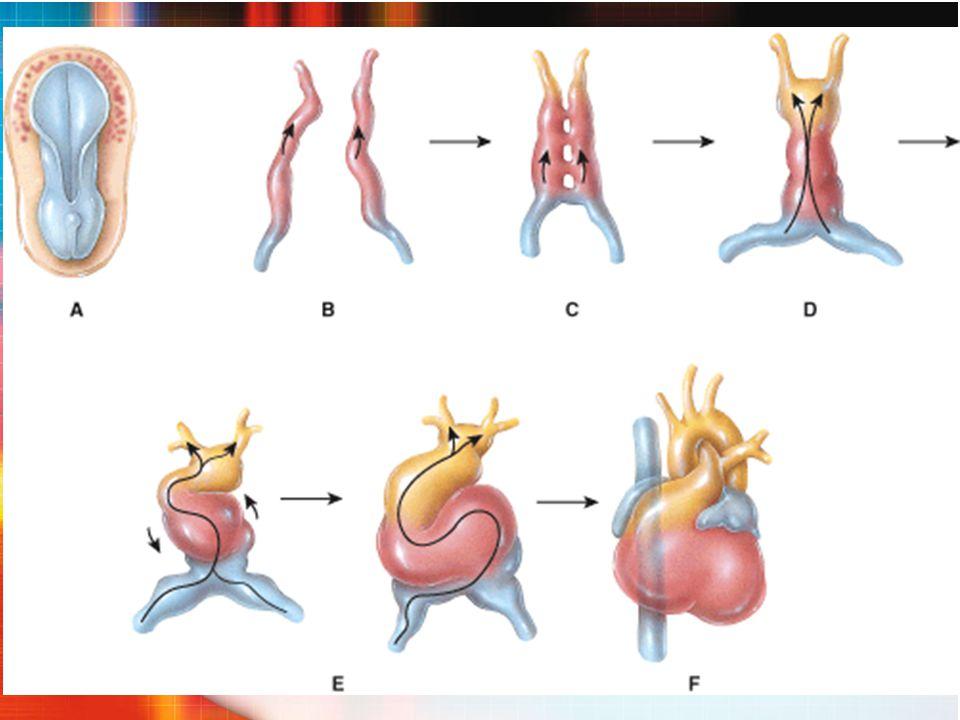 CIV_ Clínica  Pequeno tamanho (D.