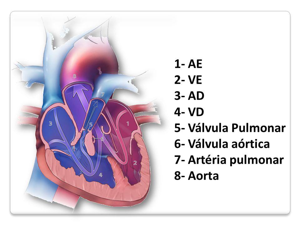 1- AE 2- VE 3- AD 4- VD 5- Válvula Pulmonar 6- Válvula aórtica 7- Artéria pulmonar 8- Aorta