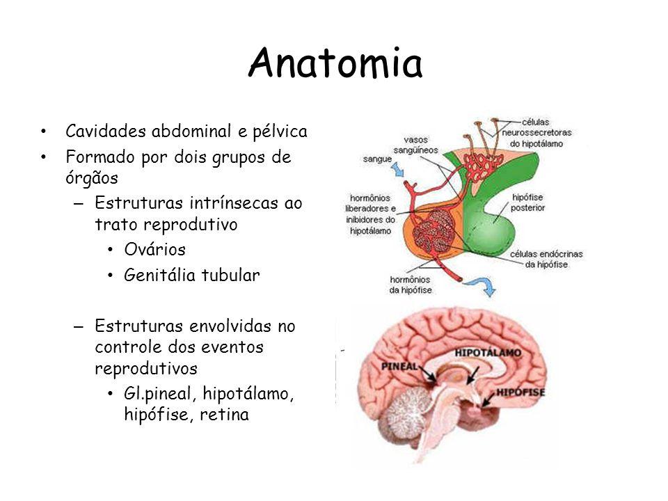 Anatomia Cavidades abdominal e pélvica Formado por dois grupos de órgãos – Estruturas intrínsecas ao trato reprodutivo Ovários Genitália tubular – Est