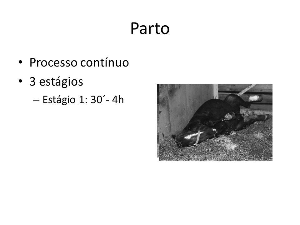 Parto Processo contínuo 3 estágios – Estágio 1: 30´- 4h