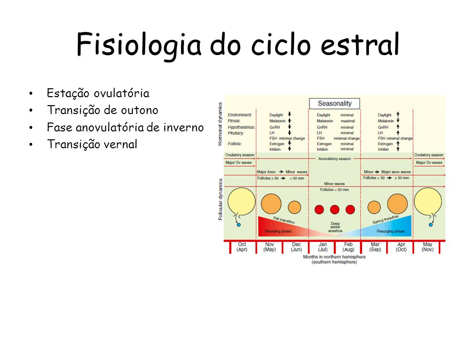Fisiologia do ciclo estral Estação ovulatória Transição de outono Fase anovulatória de inverno Transição vernal
