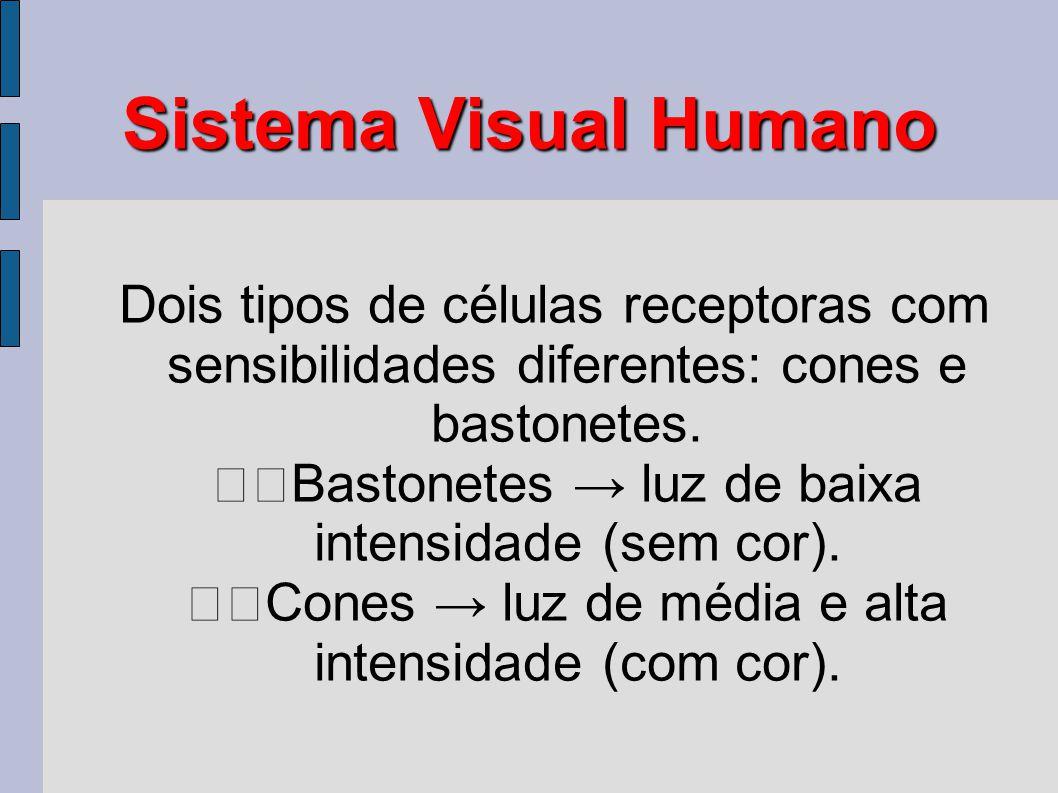 Sistema Visual Humano Dois tipos de células receptoras com sensibilidades diferentes: cones e bastonetes. Bastonetes → luz de baixa intensidade (sem c
