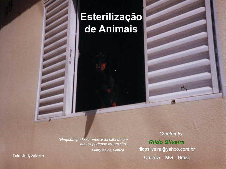 Esterilização de Animais Rildo Silveira Created by rildosilveira@yahoo.com.br Cruzília – MG – Brasil Foto: Judy Silveira Marquês de Maricá Ninguém pode se queixar da falta de um amigo, podendo ter um cão .