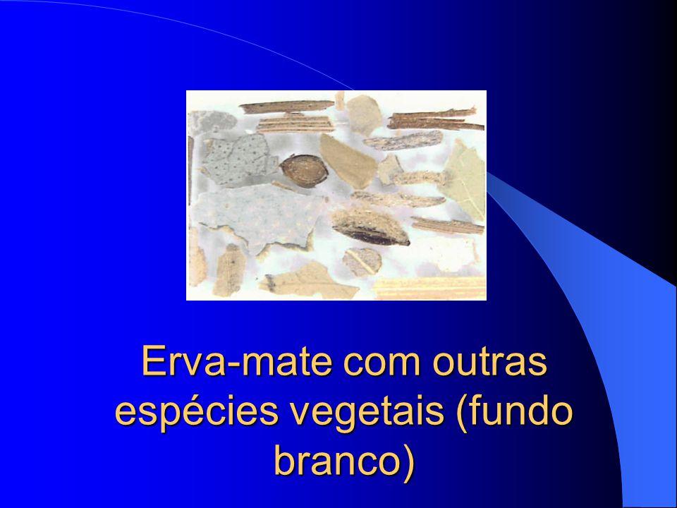 Erva-mate com outras espécies vegetais: Boldo do Chile (Pneumus boldo), Menta (Mentha spp.) e Gramineas